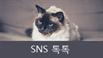 [SNS톡톡] 대전 중구 다가구주택 화재, 범인은 고양이?